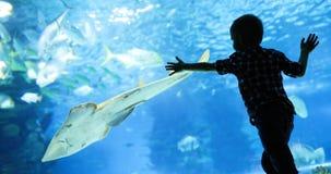 Jong geitje die op de ondiepte van vissen letten die in oceanarium zwemmen royalty-vrije stock fotografie