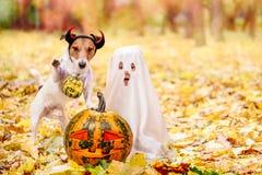 Jong geitje en hond gekleed in Halloween-kostuums met Jack o ` lantaarnpompoenen royalty-vrije stock foto's