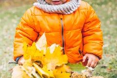 Jong geitje in greep gele bladeren in zijn handen royalty-vrije stock foto