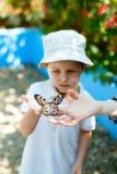 Jong geitje met vlinder Royalty-vrije Stock Foto