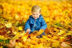 Jong geitje speelzitting in mooie gevallen bladeren royalty-vrije stock foto's