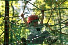 Jong geitjeklimmer Stock Foto