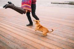 Jong gelukkig paar die met hond lopen en pret op de regenachtige ligplaats in de herfst hebben Overzeese achtergrond stock foto's