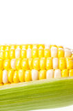 Jong graan over witte dichte omhooggaand Stock Foto's