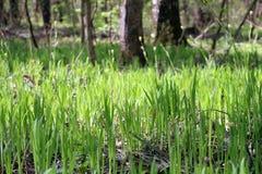 Jong gras in het bos stock foto's