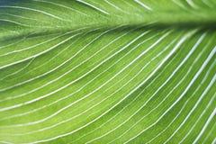 Jong groen blad 6 Stock Afbeeldingen