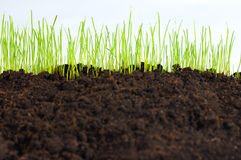 Jong groen gras, macro Stock Foto's