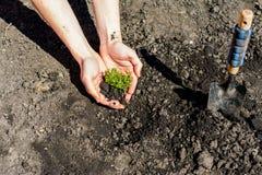 Jong groen gras Zondag Het wekken van aard stock foto