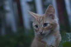 Jong katje in gras openluchtschot bij zonnige dag Stock Afbeeldingen