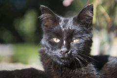 Jong katje openlucht in de zon Stock Fotografie