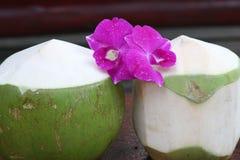 Jong kokosnotenwater Stock Afbeelding