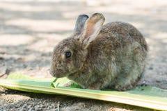 Jong konijn die bladeren in de tuin eten Stock Foto
