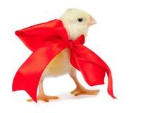 Jong kuiken met rood lint - Pasen concept Stock Afbeelding