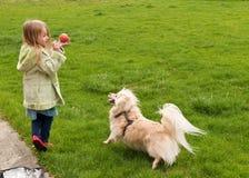 Jong meisje dat een bal werpt aan een kleine hond Stock Foto