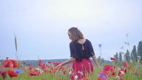 Jong meisje die door papaversgebied lopen De vrouwelijke hand wat betreft rode papaver bloeit close-up Het Concept van de liefdea stock video