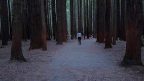 Jong meisje die en donkerrood houten bos lopen onderzoeken stock footage