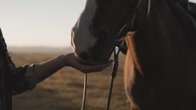 Jong meisje die en paard strijken koesteren Sluit omhoog van vrouw met paard stock videobeelden