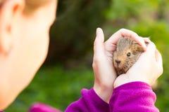 Jong meisje die jong proefkonijn in beide handen houden stock foto