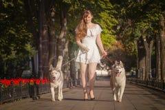 Jong meisje die onderaan de straat met twee honden lopen Stock Foto's