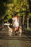 Jong meisje die onderaan de straat met twee honden lopen Royalty-vrije Stock Afbeelding