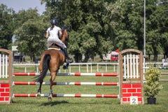 Jong meisje die op horseback springen stock foto's
