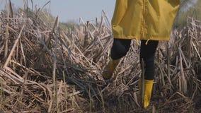 Jong meisje die zorgvuldig in moeras in gele laarzen en laag lopen stock videobeelden