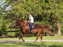 Jong meisje het berijden paard Stock Foto's