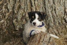 Jong meisje met puppy Stock Foto