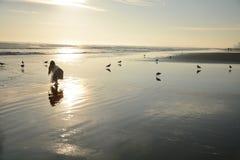 Jong meisje op mooi gouden strand stock afbeelding