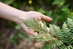 Jong Meisje wat betreft Holding Fern Leaf In Summer Park Forest Clo royalty-vrije stock fotografie