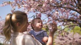 Jong moedermamma die haar houden weinig de jongenskind van de babyzoon onder tot bloei komende SAKURA Cherry-bomen met dalende ro stock video