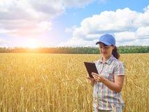 Jong mooi landbouwersmeisje die zich op geel tarwegebied bevinden stock foto's