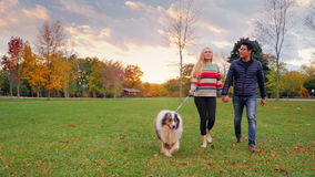Jong onbezorgd paar die met een hond in het park lopen steadicam schot stock footage