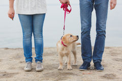 Jong paar dat langs het strand met hun hond loopt Royalty-vrije Stock Foto