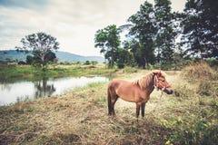 Jong paard op het gebied Stock Foto's