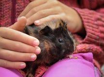 Jong proefkonijn in de handen van een kind royalty-vrije stock foto's