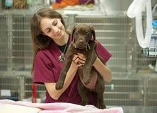 Jong puppy bij de dierenarts Stock Foto's
