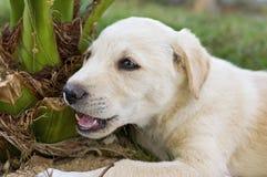 Jong puppy dat een installatie kauwt Royalty-vrije Stock Foto's