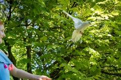 Jong rood haired meisje met een duif in de schaduw van grote groene bladbomen royalty-vrije stock afbeelding