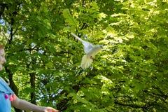 Jong rood haired meisje met een duif in de schaduw van grote groene bladbomen stock foto