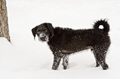Jong in Sneeuw Royalty-vrije Stock Afbeeldingen