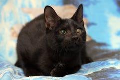 Jong tiener shorthair katje op een blauwe achtergrond Royalty-vrije Stock Foto's