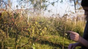 Jong tienermeisje die droog gras in het park op een zonnige dag bekijken stock video