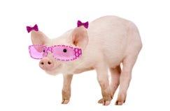 Jong Varken die zonnebril dragen royalty-vrije stock afbeelding