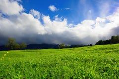 Jong vers groen gebied op de zomer stock fotografie