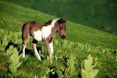 Jong Wild paard in aard Stock Afbeelding