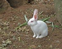 Jong wit konijn royalty-vrije stock foto