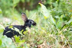 Jong zwart konijn die een bloem eten Royalty-vrije Stock Afbeeldingen