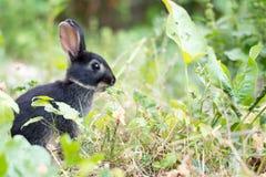 Jong zwart konijn die installatie eten Royalty-vrije Stock Afbeelding