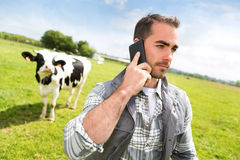 Jonge aantrekkelijke landbouwer in een weiland met koeien mobiel gebruiken Stock Fotografie